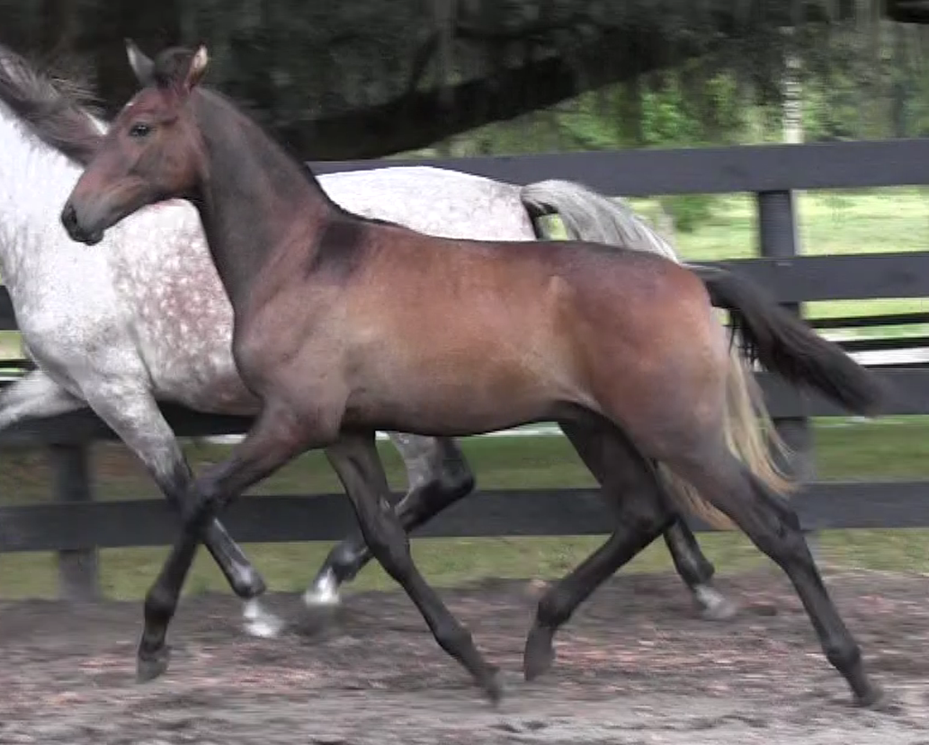 Diamante Oct 22 trot 1